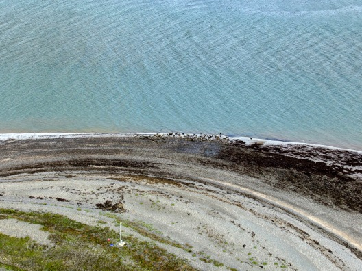 Distant aerial research photograph of seals taken as research for Cumbria Wildlife Trust at South Walney