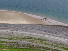 Research photograph of Grey Seals at South Walney Nature Reserve for Cumbria Wildlife Trust by Aerial Artwork